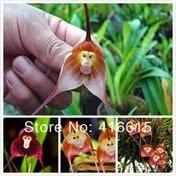 importar-sementes-plantas-vegetais-china
