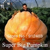 importar-sementes-ababora-gigante-china
