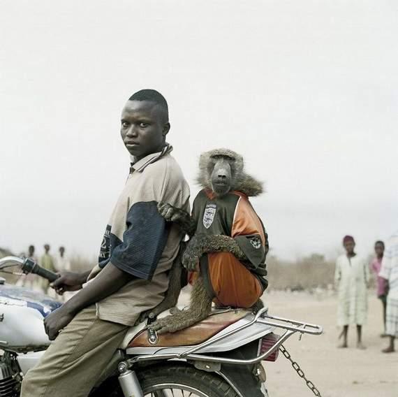 pet-bizarro-macaco